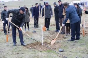 """Kənd Təsərrüfatı Nazirliyinin kollektivi """"Bir gündə 650 min ağac əkək"""" kampaniyasında aktiv iştirak edib"""